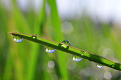 Fresh green grass with dew drops closeup Stock Photography