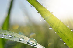 Fresh green grass with dew drops closeup. Stock Photography