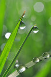 Fresh green grass with dew drops Stock Photography