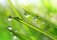 Fresh green grass with dew drops closeup. Stock Photos