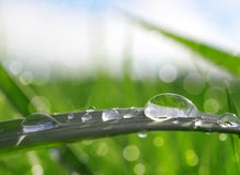 Fresh green grass with dew drops closeup Royalty Free Stock Photography