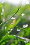 Fresh green grass with dew drops closeup. Stock Photo