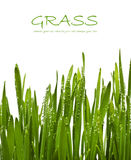Fresh green grass with dew drops Royalty Free Stock Photography