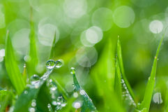 Fresh green grass with dew drops natural background Stock Photos
