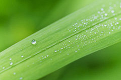 Fresh green grass. Dew drops on fresh spring grass on a spring morning Stock Image