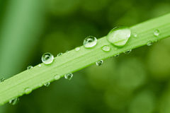 Fresh green grass. Dew drops on fresh spring grass on a spring morning Stock Photo