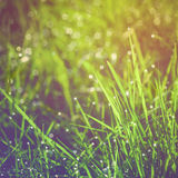 Fresh green grass with dew Stock Photos