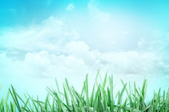 Fresh green grass with droplets after the rain with sky Stock Photography