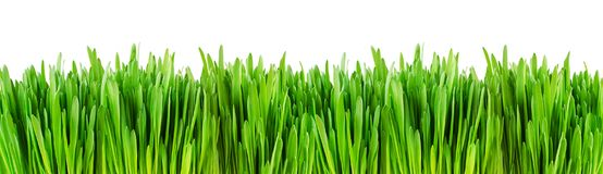 Fresh green grass edge. Isolated on white background Royalty Free Stock Photo