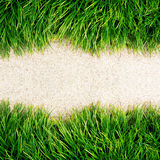 Fresh Green Grass on floor Stock Image