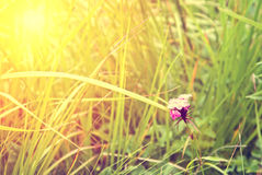 Fresh green grass illuminated by sun Royalty Free Stock Photography