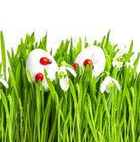 Fresh green grass with flowers and easter eggs Royalty Free Stock Image