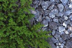 Fresh green grass with Gravel rock. On garden Stock Photos