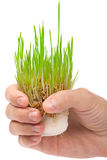 Fresh green grass in the hand Stock Photo