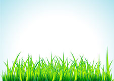 Fresh green grass illustration. Fresh green grass, decorative illustration Stock Photo