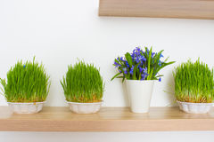 Fresh green grass isolated Royalty Free Stock Photography