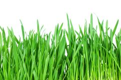 Fresh green grass isolated on white Royalty Free Stock Images
