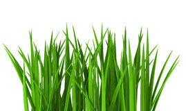 Fresh  green grass isolated on white. Background Royalty Free Stock Photo