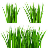Fresh  green grass isolated on white Royalty Free Stock Photography