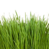 Fresh green grass isolated on a white background Royalty Free Stock Photos