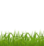 Fresh green grass isolated on white background, space for your t Stock Images