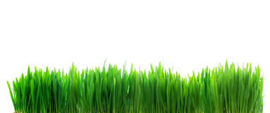 Fresh green grass isolated on white Stock Photos