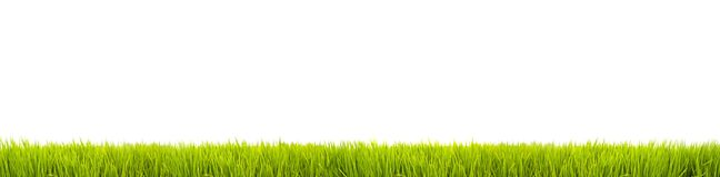 Green grass: fresh green grass large panorama banner as frame border in a seamless empty white background. Fresh green grass large panorama as wide frame border royalty free stock photography