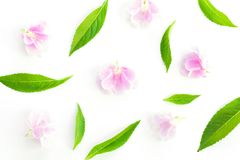 Fresh green grass leaves and pink flower Royalty Free Stock Photos