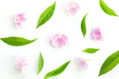 Fresh green grass leaves and pink flower Stock Images