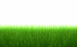 Fresh green grass line Royalty Free Stock Photo