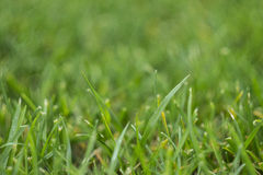 Fresh green grass macro Stock Image