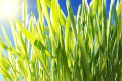 Fresh green grass macro with sun Stock Photos