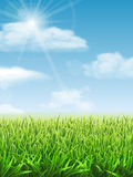 Fresh green grass on the meadow. And blue sky. Vector nature background Stock Photo