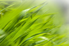Fresh green grass in the morning light Stock Photos