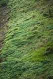 Fresh green grass on the mountain background Stock Photography