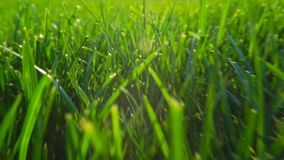 Fresh green grass natural background texture, lawn for the background. Shine of sunlight stock video