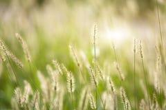 Fresh green grass nice background Royalty Free Stock Photos