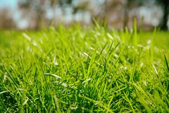 Fresh green grass outdoors. Fresh green grass out doors Royalty Free Stock Photos