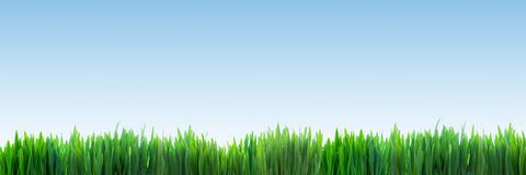 Fresh green grass panorama on clear blue sky background Stock Photography