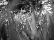 Fresh green grass in the park in black and white mode Stock Image