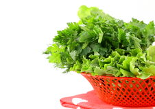 Fresh green grass parsley dill onion herbs mix Stock Photos