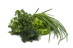 Fresh green grass parsley dill onion herbs mix Royalty Free Stock Image