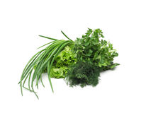 Fresh green grass parsley dill onion herbs mix Stock Images