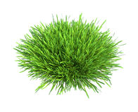 Fresh green grass piece of land isolated on white Stock Photos