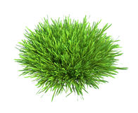 Fresh green grass piece of land isolated on white Stock Photography