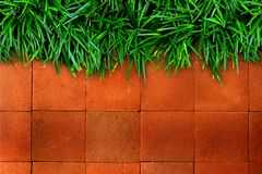 Fresh green grass and red brick Stock Photography