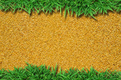 Fresh green grass on sand Royalty Free Stock Image