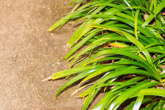 Fresh green grass on sand. Stock Images