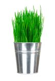 Fresh green grass in small metal bucket isolated on white Royalty Free Stock Image