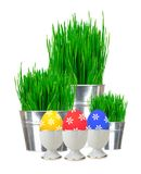 Fresh green grass in small metal buckets isolated on white Royalty Free Stock Photo
